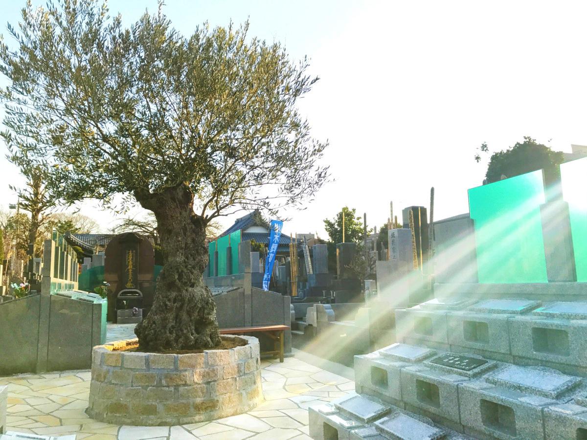杉並堀ノ内 樹木葬 オリーブ光の庭園