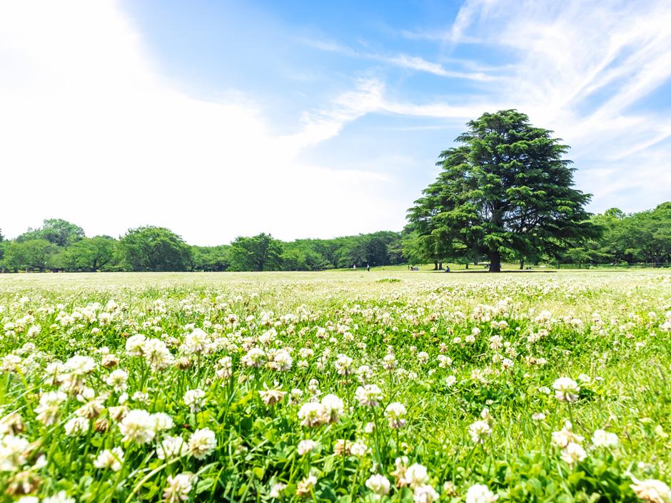 新緑と青空の広がる風景